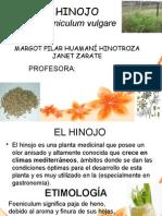 EXPOSICION  TRABAHO DEL HINOJO.pptx
