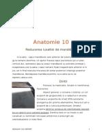 Anato-10