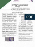 Identificacion de S. Cerevisiae