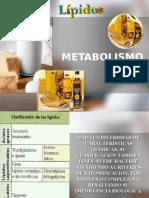Metabolismo de Los Lípidos1