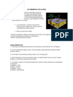 LAS MEMBRANA CELULARES.docx