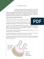 Resumen Solemne 3 Fisiologia GI