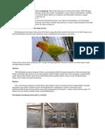 ternak love bird.pdf