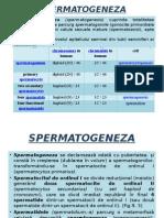 GAMETOGENEZA (spermatogeneza, ovogeneza)