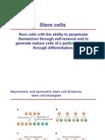 Cellule Staminali Del Cancro I