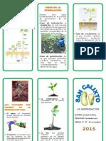 Germinacion de Las Plantas Joaquin Salinas 5º d