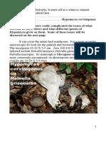Hypomyces cervinigenus