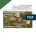 Sphaeronaemella helvellae