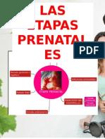 ETAPAS PRENATALES