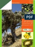 09_Plante_tropicale.pdf