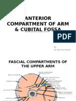 Anterior Compartment of Arm & Cubital Fossa