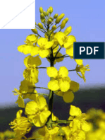 AMMI analysis of yield performance in canola (Brassica napus L.) across different environments
