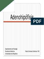 Adenohipofisis.pdf