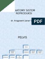 Anatomi Reproduksi Blok Ls