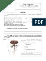 2. Diversidade Das Plantas - Teste Diagnóstico (3)