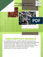estafilococos-140921160013-phpapp01