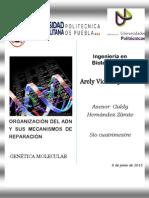 Investigación de La Organización y Mecanismos de Reparación Del Adn