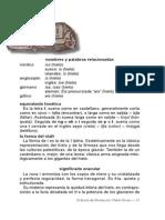 manual de Runas 8.pdf