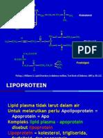 17 - Lipid