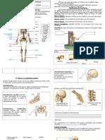 Los Huesos de Nuestro Cuerpo