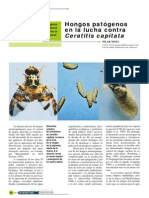 Hongos patogenos contra la mosca de la fruta