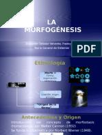15 Morfogénesis