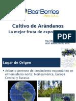 Cultivo de Arándano - La Mesdffdsjor Fruta de Exportación