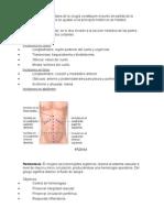 Tiempos quirúrgico1.docx