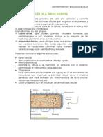 Labo 2.Célula Procariota