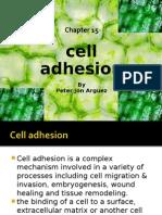 Cell Adhesion!!!