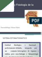 anatomiayfisiologiadeladeglucionc-140819161556-phpapp02.pptx