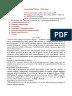 Med Ita - Immunologia Cellulare e Molecolare