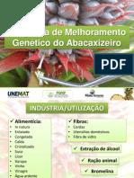 programa_abacaxizeiro.pdf