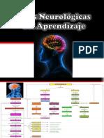 Bases Neurologicas Del Aprendizaje