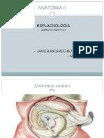 Anatomia II Digestivo 5