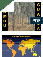 Bambu-Anatomia Guadua # 1