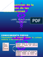 Consecuencias de La Afectación de Las Motoneuronas