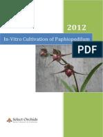 In-Vitro Cultivation of Paphiopedilum
