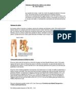 Sintomas del Nervio Ciático y la Ciática - Doctor Quiropractico en Atlanta Ga    Gainesville Ga