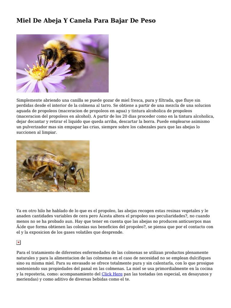 Miel de abeja con canela para adelgazar