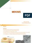 Meiosis 2015
