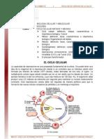 01. Ciclo Celular Mitosis y Meiosis Lectura