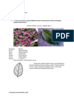 Morfologi Tumbuhan (Daun)