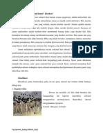 Taksonomi kriptogamae