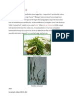 LAMUN (Seagrass)