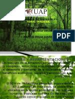 Bosques y Representaciones