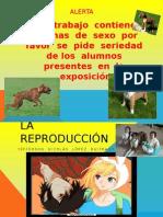 alerta.pptx
