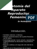 1 Anatomía Del Aparato Reproductor Fem