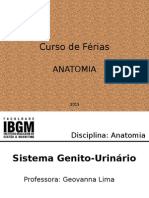 Aula Sistema Genito-UrináRio