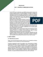 REPRODUCCION Y DESARROLLO EMBRIONARIO EN PECES